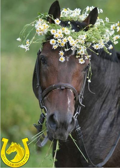 Золотая подкова. Лошадь